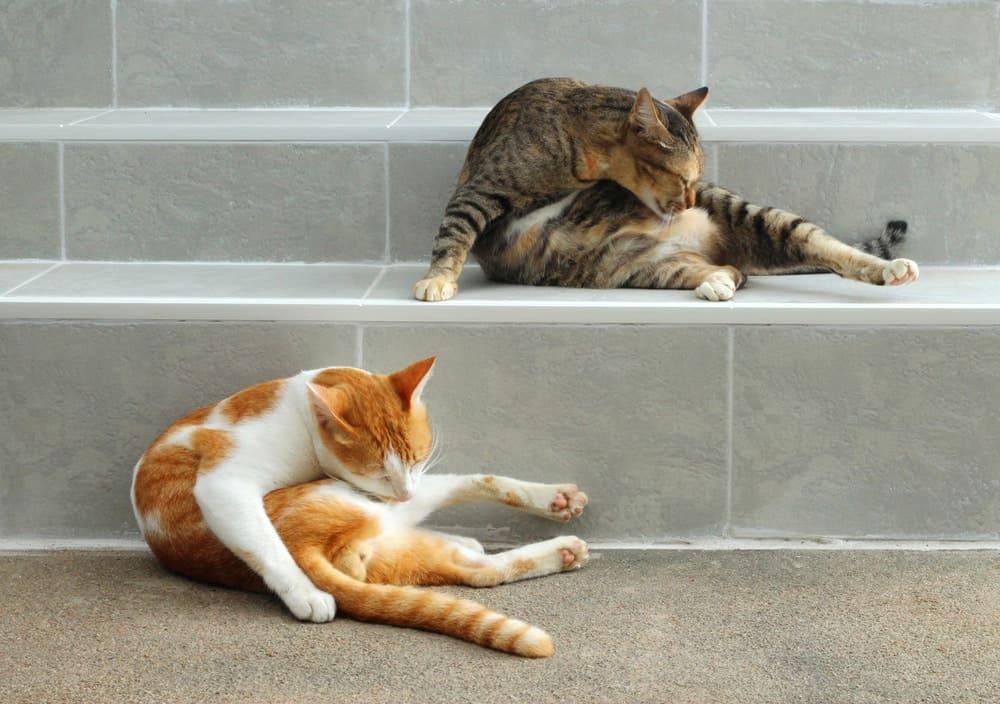 Katzen im Fellwechsel