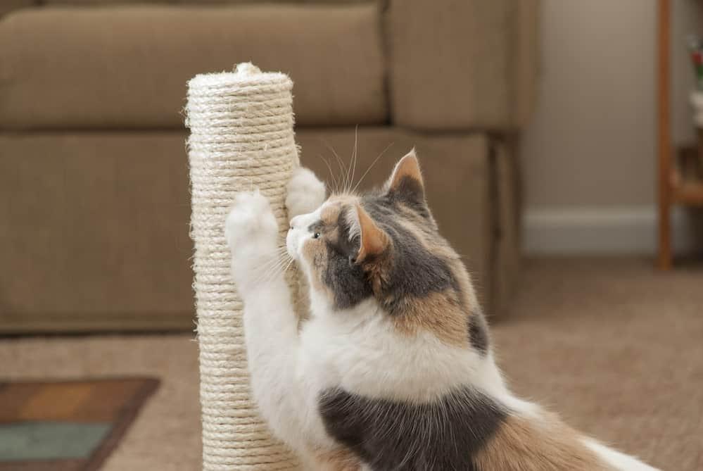 Krallen abwetzen der Katze