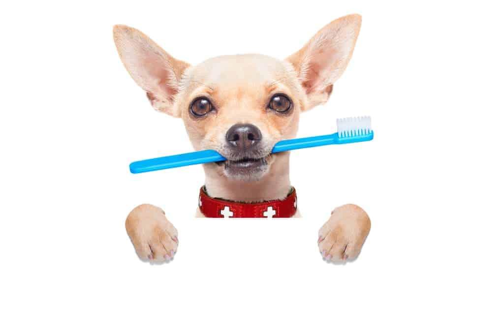 Zahnbürste für Hunde