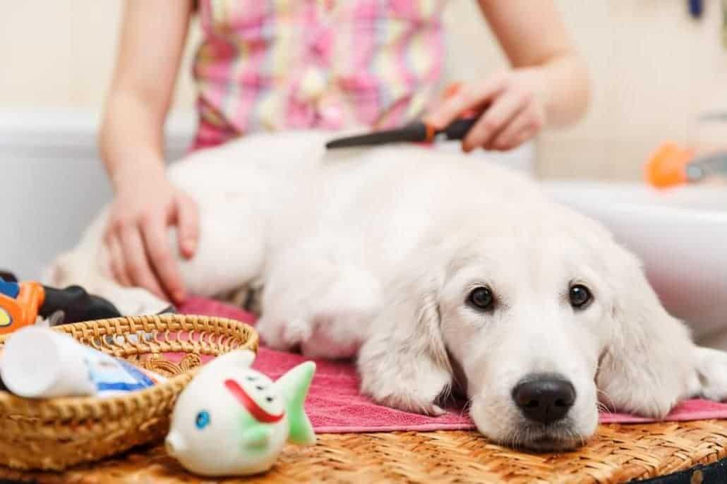 Hund lässt sich entspannt bürsten