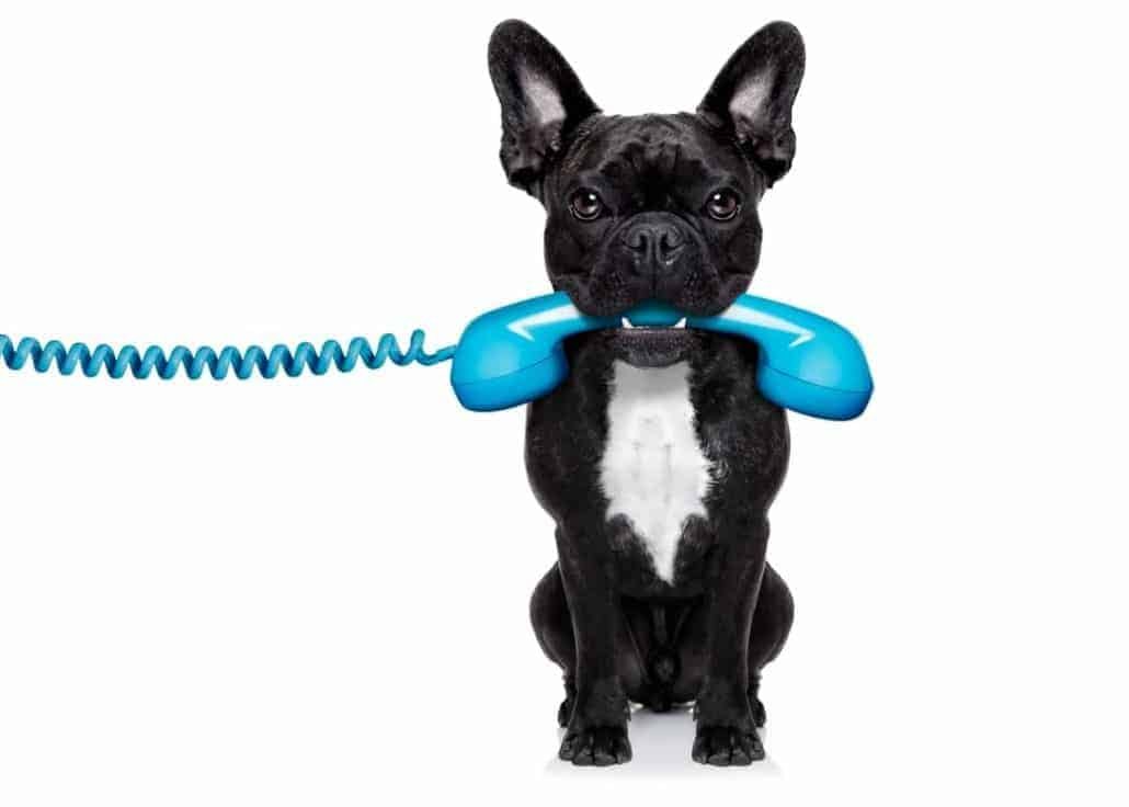 Hund hält Telefon