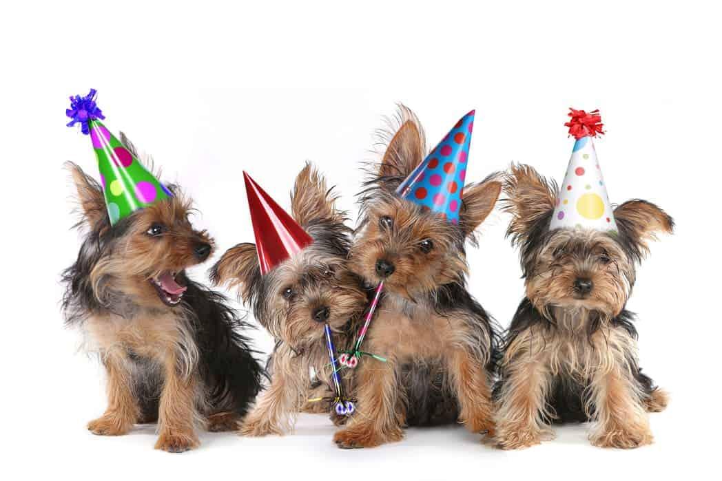 Hunde mit Partyhüten