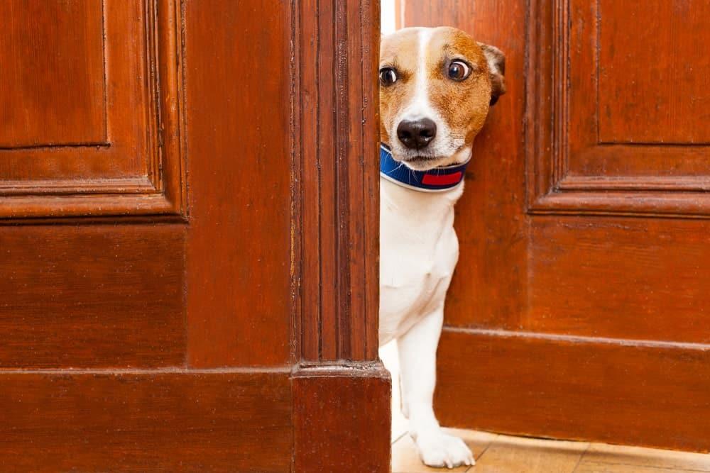 Hund wartet an Tür