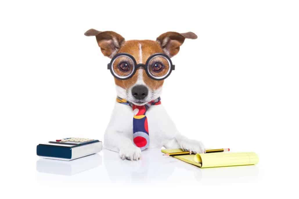 Hund spielt Sektretär