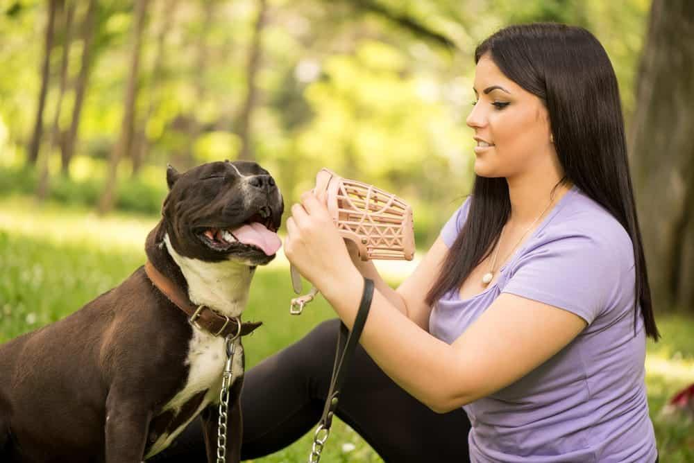 Frau zieht Hund Maulkorb an