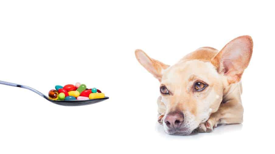 Schilddrüsenunterfunktion beim Hund