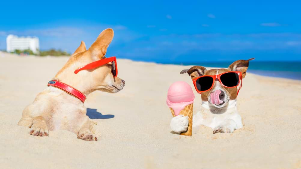 Hund am Strand mit Eis