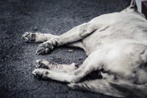 Hund gestorben
