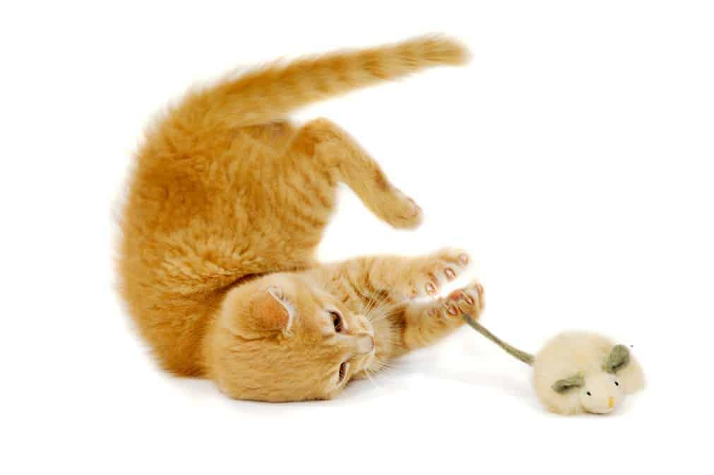 Beschäftigung für Katzen