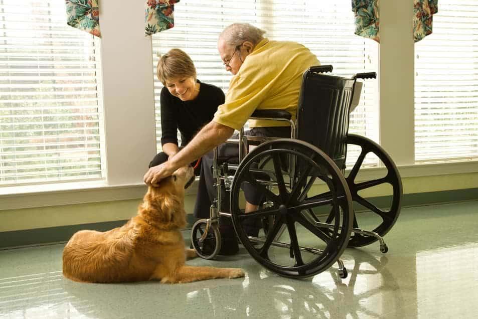 Therapiehund in der Seniorenpflege