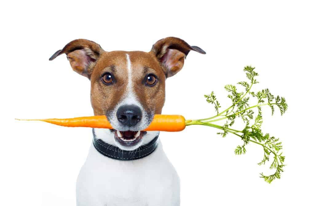 Hund mit Möhre im Maul