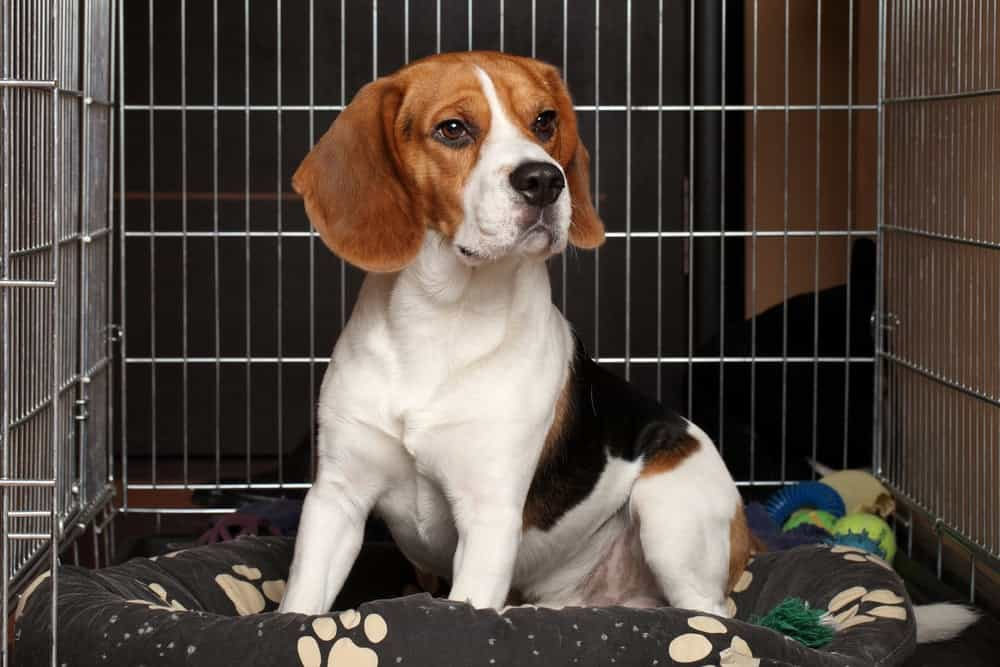 Hunde fühlt sich in Hundebox wohl