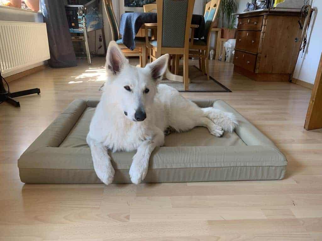 Finnto Hundebett orthopädisch