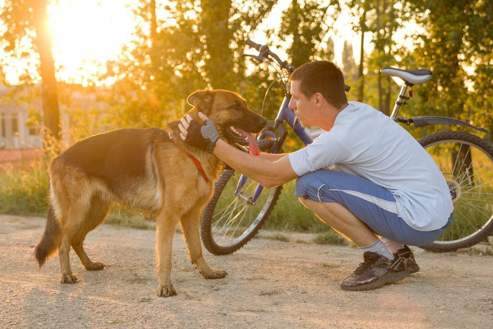 Fahrrad fahren mit Hund
