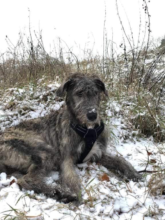 Hund liegt auf kaltem Boden