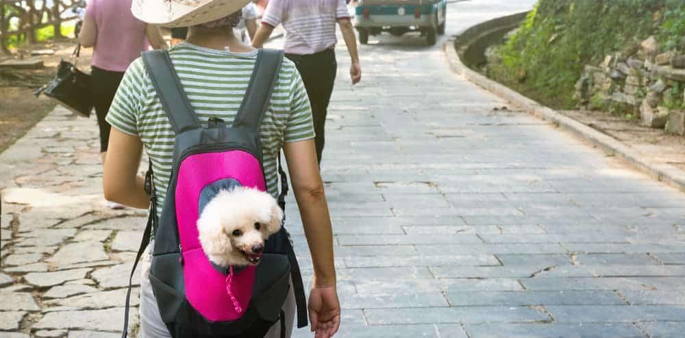 Hund im Hunderucksack