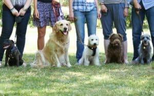 Hunde beim Hundetrainer