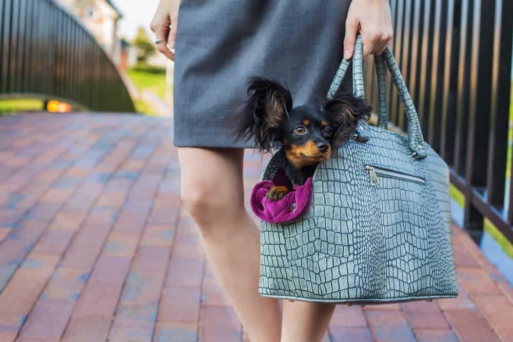 Hundetasche mit kleinem Hund