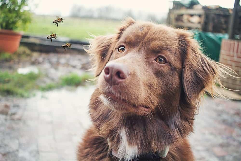 Insektenstich beim Hund