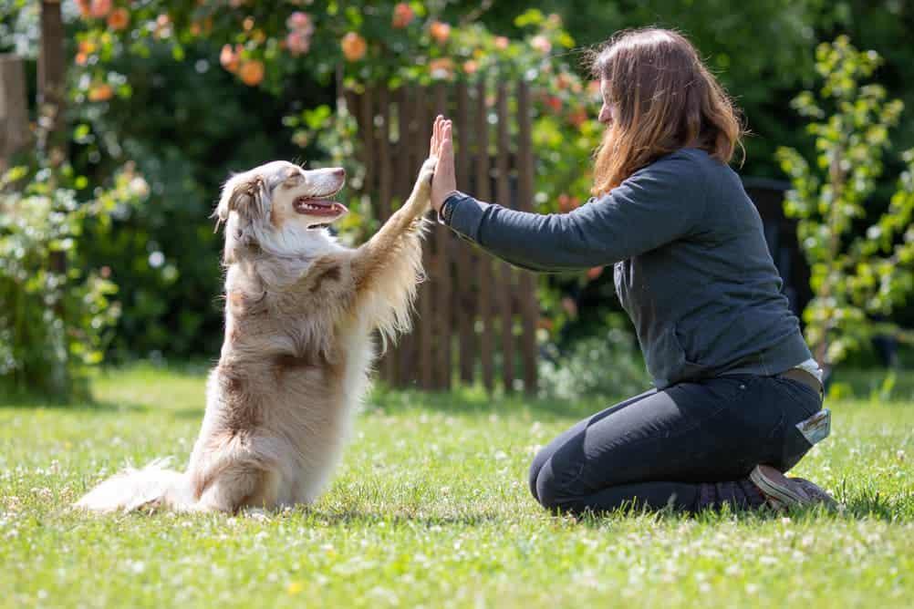 Frau und Hund üben Trick