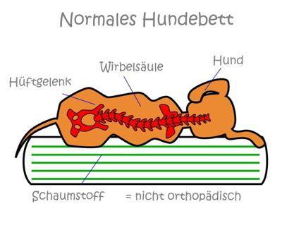 Wirbelsäulenform auf einem normalen Hundebett