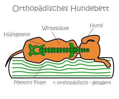 Wirbelsäulenform auf einem orthopädischen Hundebett