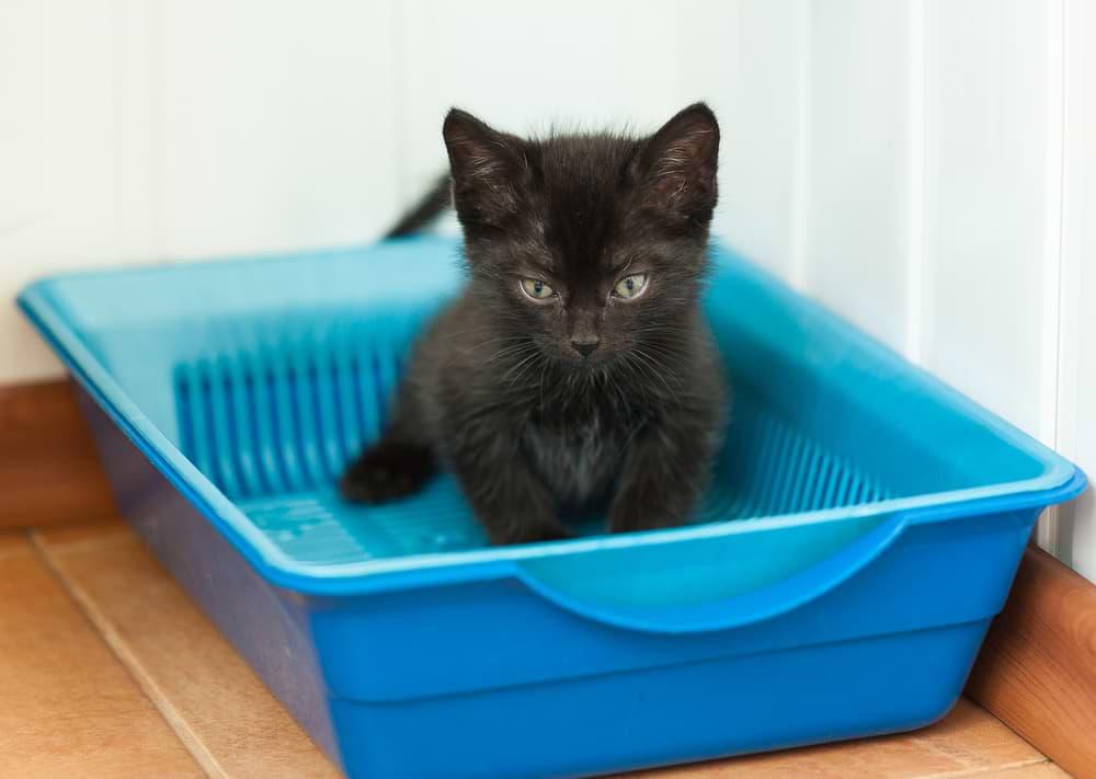 Siebeinsatz für das Katzenklo