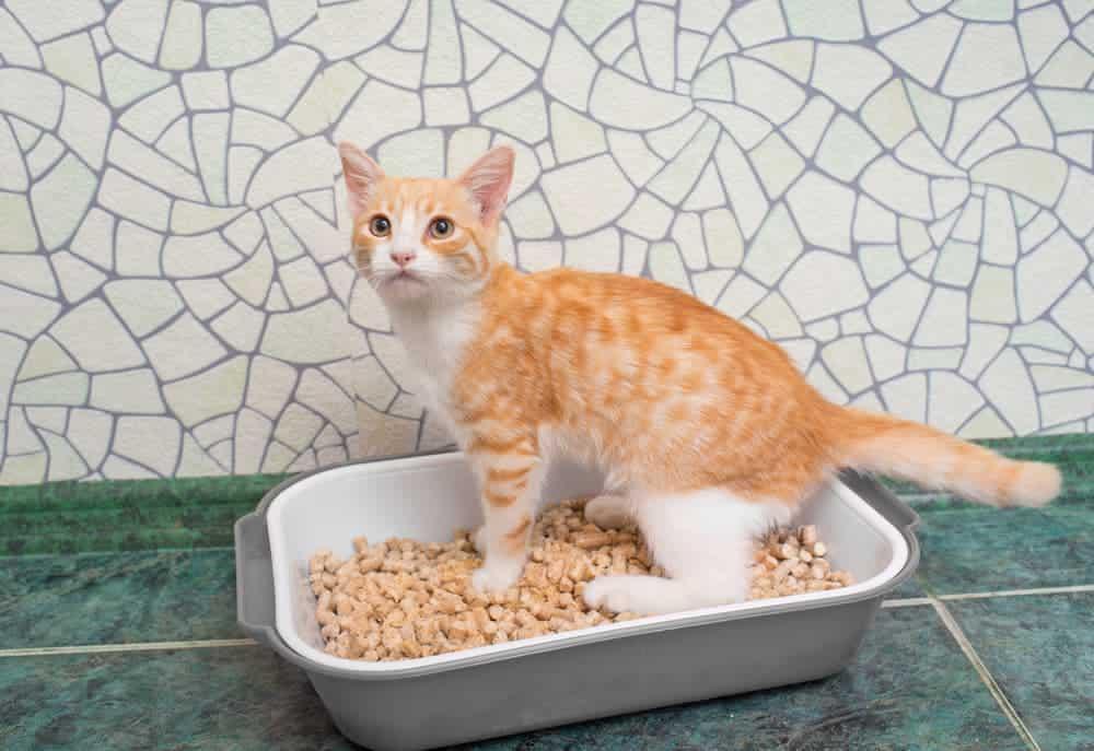 Katze im zu kleinen Katzenklo
