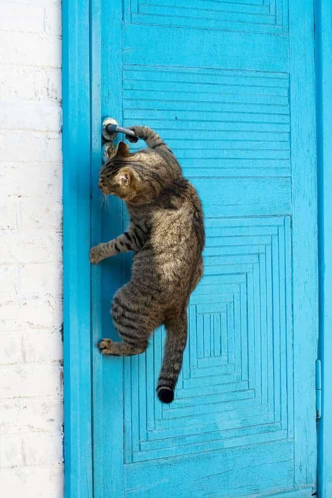 Katze macht eine Tür auf