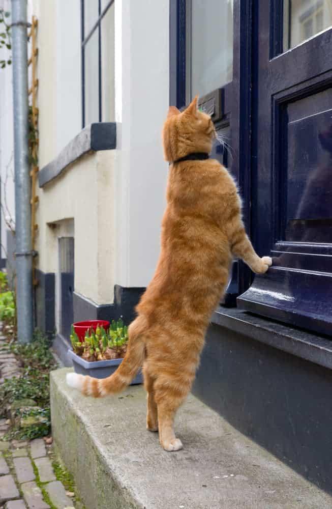 Katze möchte ins Haus