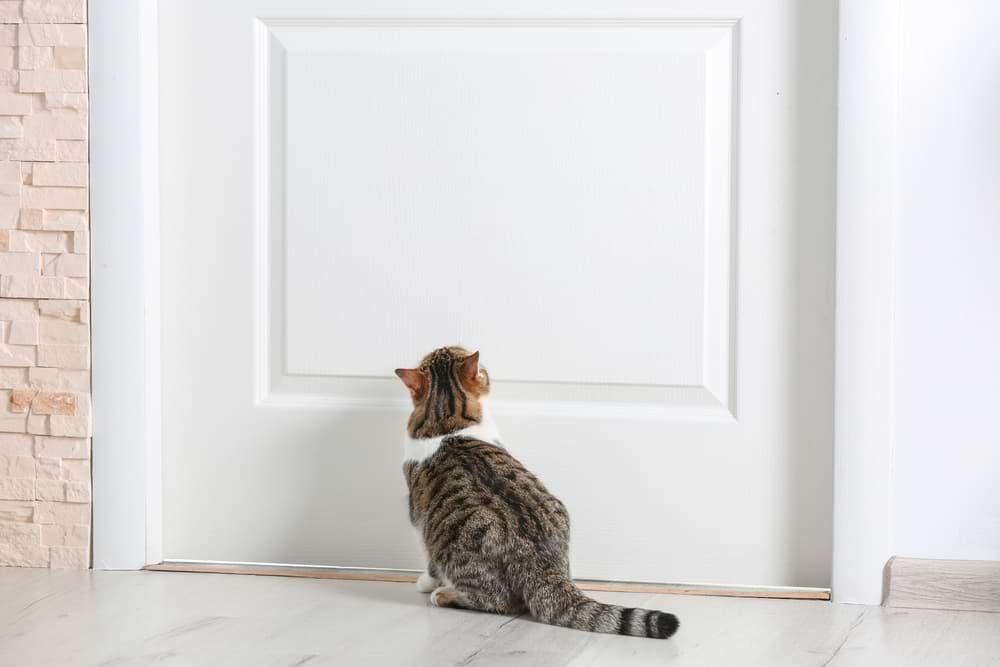 Katze vor verschlossener Tür