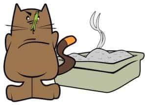 Ein stinkendes Katzenklo