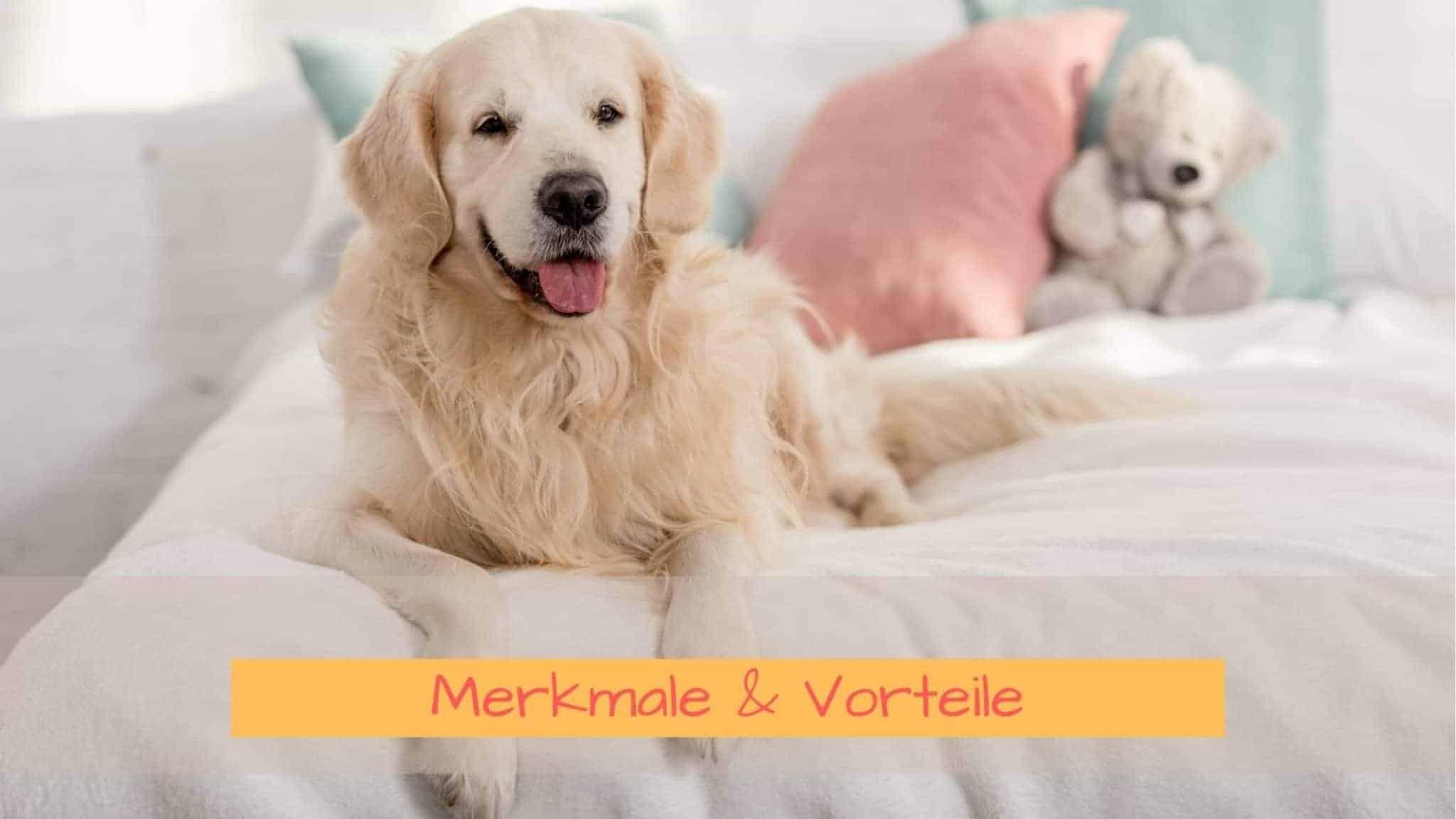 Merkmale und Vorteile von orthopädischen Hundebetten