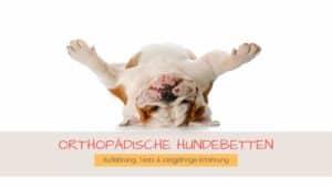 Orthopädische Hundebetten getestet