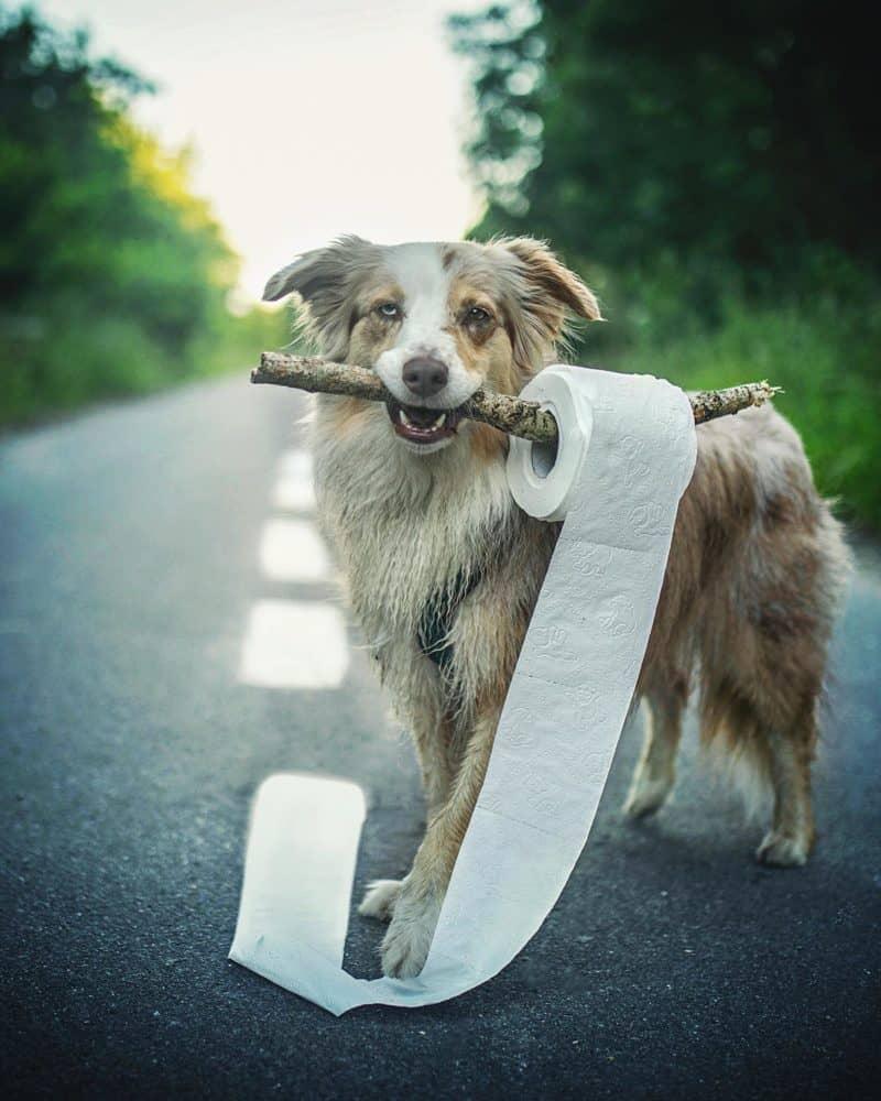 Hund hält Gegenstand