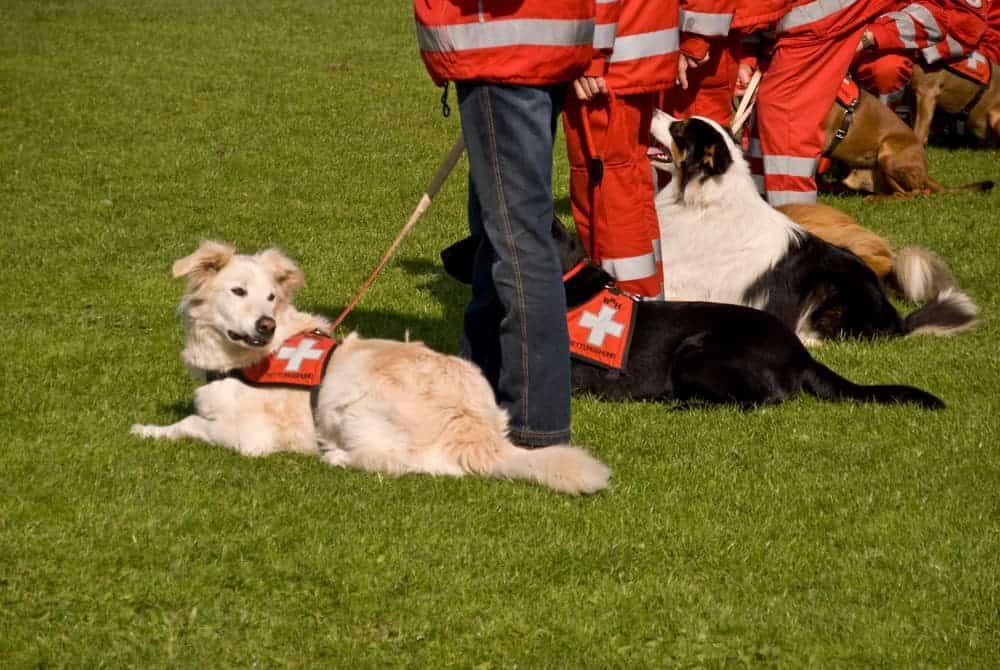 Eine Rettungshundestaffel
