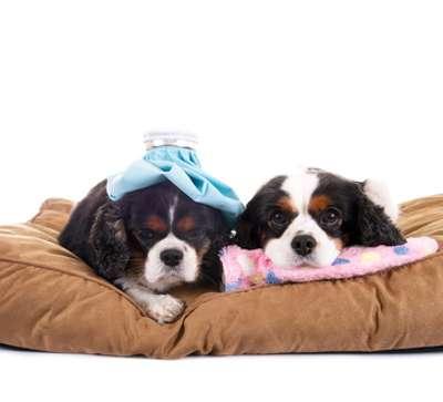 Rückenbeschwerden bei Hunden sind keine Seltenheit
