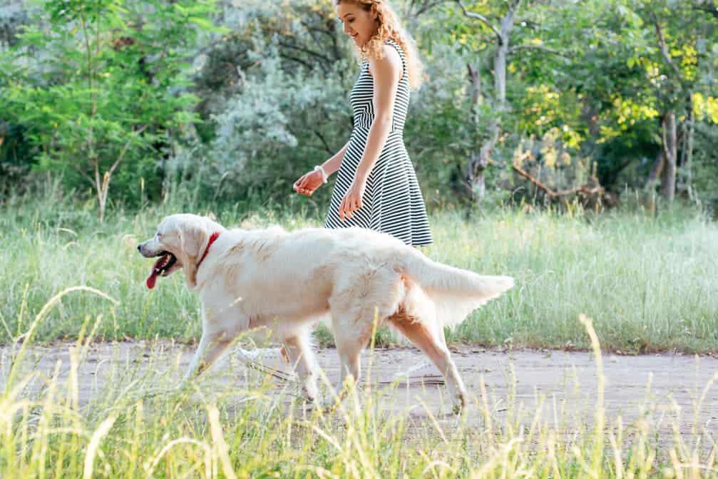 Longieren mit Hunden