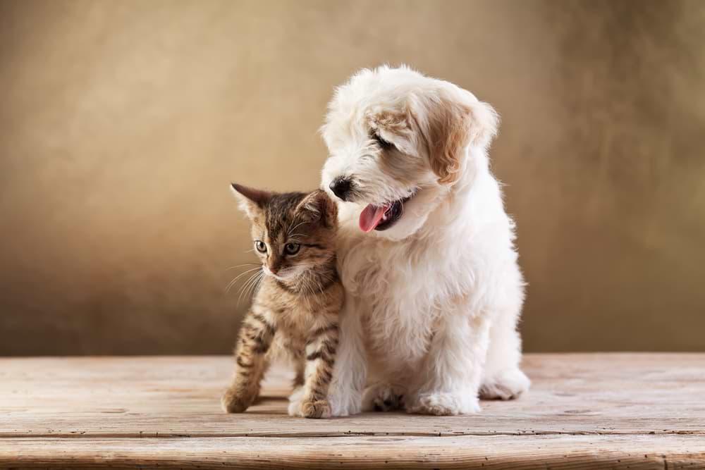 Kitten und Welpe