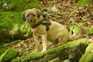 Hund mit Hundegeschirr