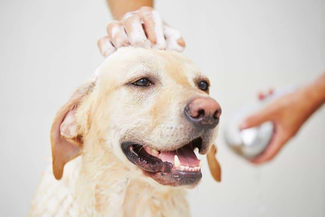 Rückfettendes Hundeshampoo