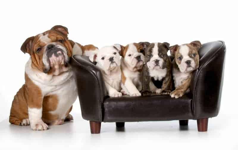 Hundesofa - ein echter Hingucker