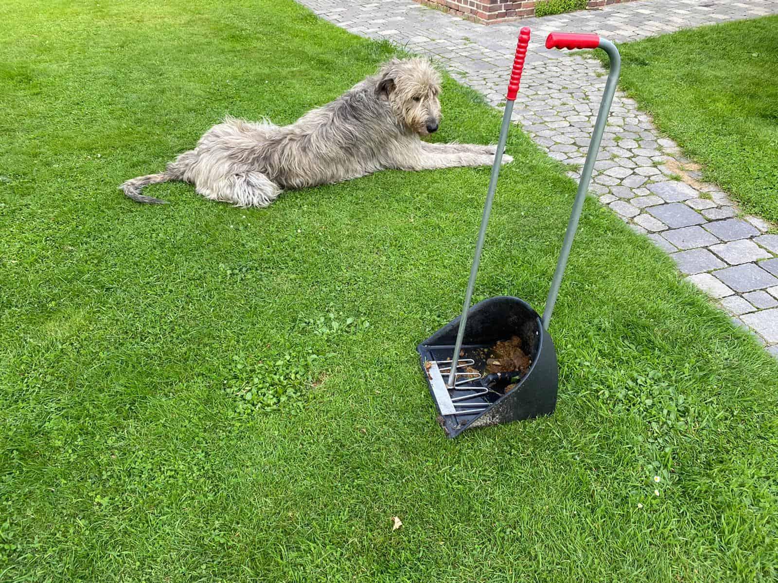 Hundekotschaufel
