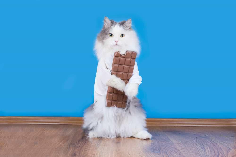 Katzenfutter ohne Zucker ist wichtig