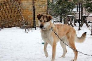 Hund im Schnee im Garten an angeleint