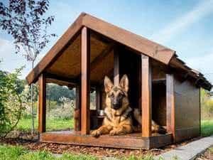 Schäferhund in einer Hundehütte mit Veranda
