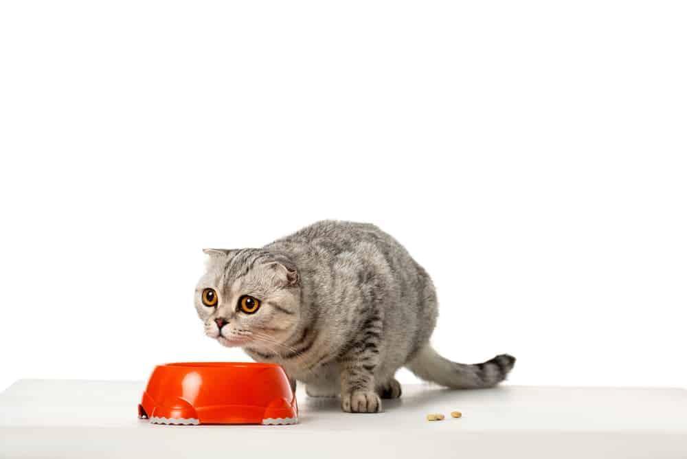 Was Katzen nicht fressen dürfen