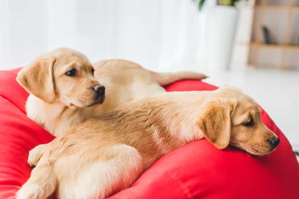 Der richtige Schlafplatz
